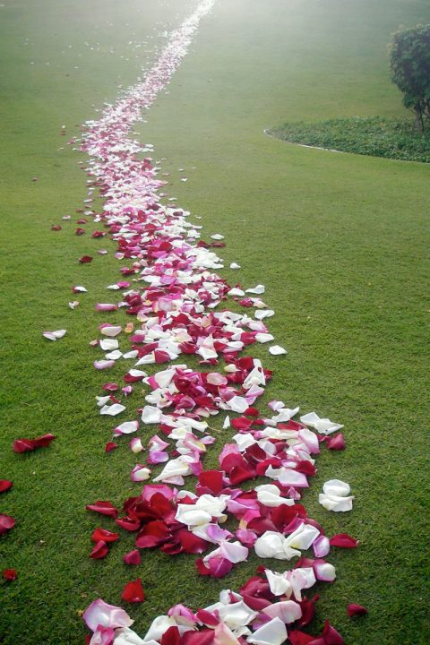 path or rose petals trailing off into the distance