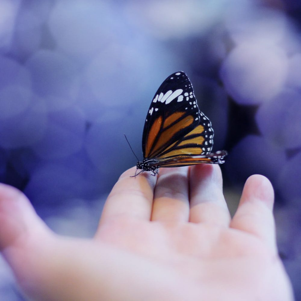 Spiritual care purple background with monarch butterfly